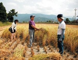 吳慶鐘(中)帶領民眾體驗手工割稻的辛勞。(吳慶鐘提供)
