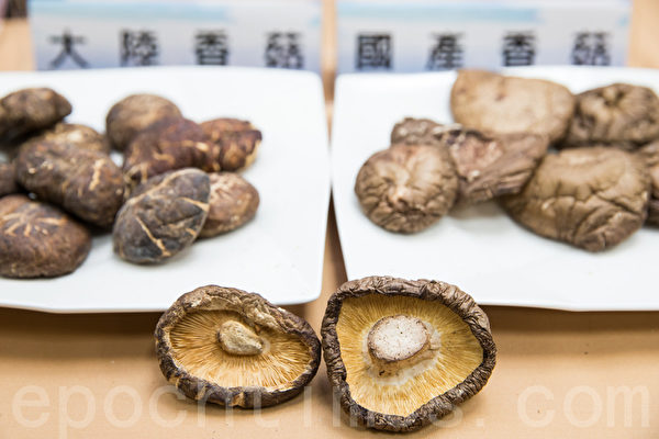 國產香菇(右)較無裂痕,淺黃色,香氣濃郁;大陸香菇(左)則是有深淺紋路、表面光滑,顏色為黃褐色至淺褐色,菇柄很短、有異味。(攝影:陳柏州 /大紀元)