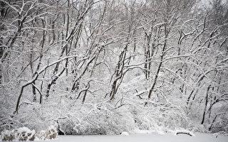 1776年寒冬 撤退新澤西