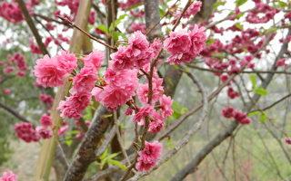 新詩:林內之春