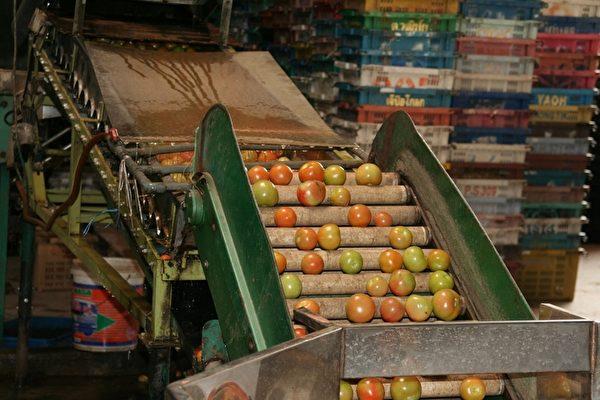 消费者应了解食物如何生产、加工。(SEACON提供)