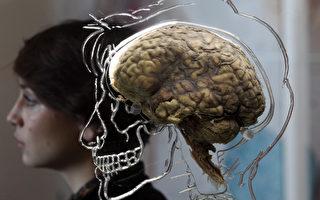 研究:女性大脑较男性小 却更具效率