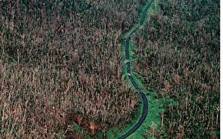 常目擊具有綠色血液外星人和幽浮出現的波多黎各「愛爾洋奎」(El Yunque)山地。(Jose Jimenez/Primera Hora/Getty Images)