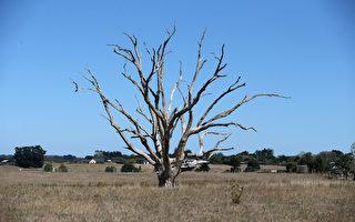 新西蘭遭嚴重旱災 恐引發經濟蕭條