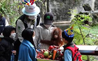 红毛猩猩满周岁 动物园开趴