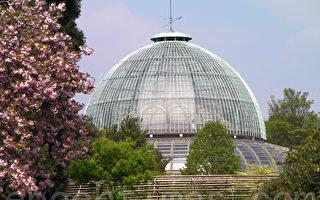 組圖:比利時王室花園對公眾開放(二)
