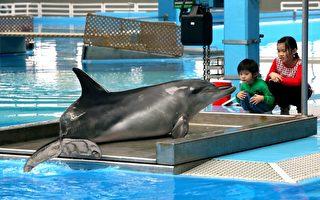 香港海洋公園海豚疑「受囚」自殘抗議