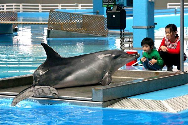 """香港海洋公园海豚疑""""受囚""""自残抗议"""
