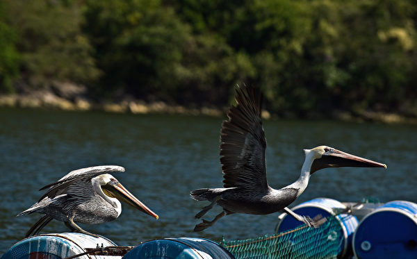 苏米德罗大峡谷格里哈尔瓦河面上的鹳。(Ronaldo Schemidt/AFP)