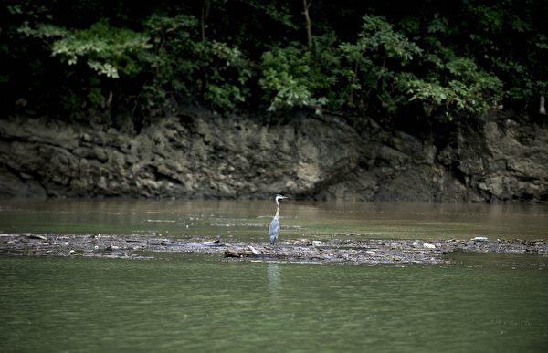 苏米德罗大峡谷格里哈尔瓦河面上的鹳。(Yuri CORTEZ/AFP)