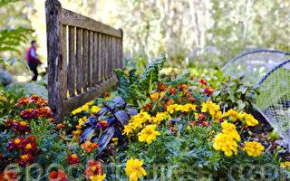 澳洲悉尼蓝山百年西山花园秋意浓