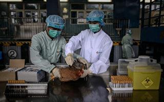 研究:H7N9病毒可通過飛沫傳播