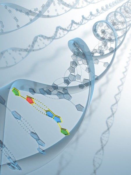 DNA分析顯示該骨骼是人類。(Fotolia)