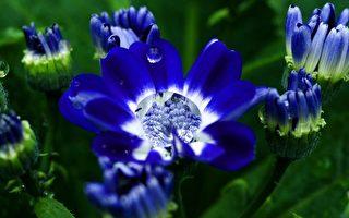 組圖:露水花卉