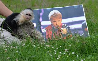 """组图:贾斯汀·比伯宠物猴遭遗弃后重获德国""""家庭""""温暖"""