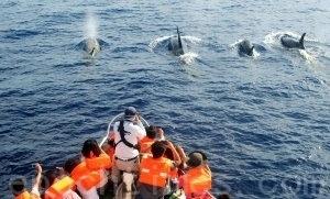 夏日赏鲸体验少年PI奇幻漂流