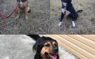 搜救犬建功 拟培育路径追踪犬