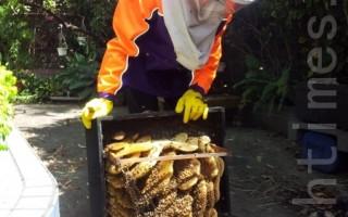 蜂巢日渐增大 蜂巢瘦身另类服务