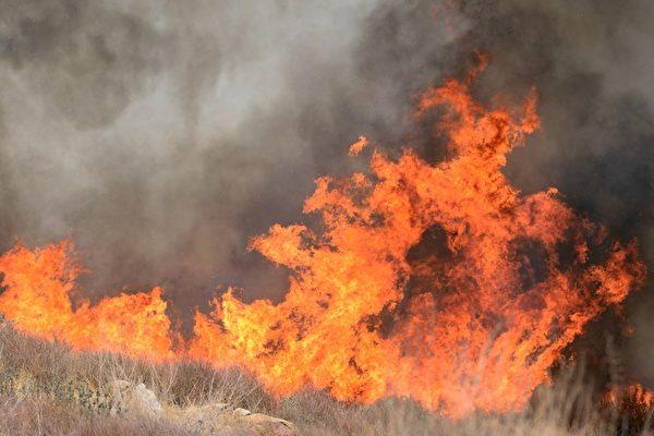 加州野火季 更長更兇猛