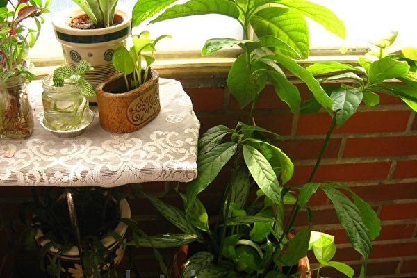 有香气的室内盆栽  净化空气还能增加睡意