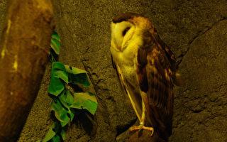 童话:大地的眼睛(四)猫头鹰的礼帽