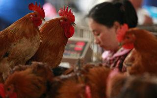 港大:H7N9基因突变 致病毒容易感染人类