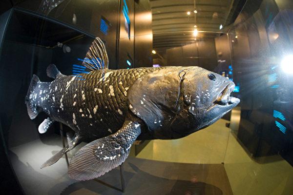 四億年不變 活化石腔棘魚奇特的一夫一妻