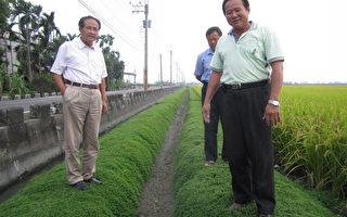 田埂如绿龙 林清源环保种稻