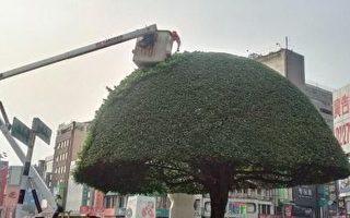 榕樹造型 美麗嘉義市容