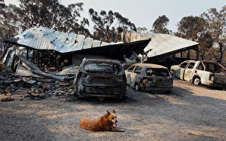 澳洲紐省叢林大火保險賠償費預估1.3億