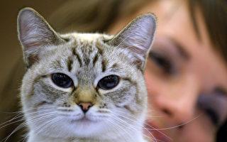 科学实验:猫明白物理学和因果关系
