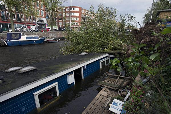 2013年10月28日,強風將荷蘭阿姆斯特丹運河旁樹木連根拔起。(EVERT ELZINGA / ANP / AFP)