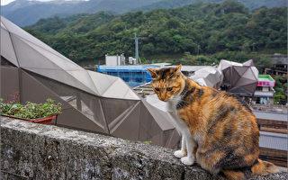 铁道赏猫矿村 猴硐观光重生