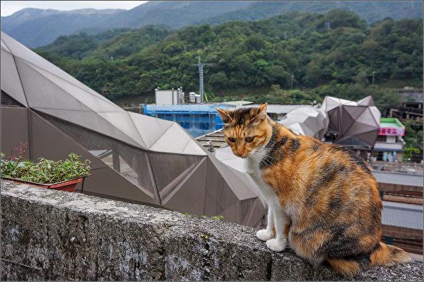 美国有线电视新闻网(CNN)评选猴硐猫村为全球6大赏猫景点。新北市府8日表示,猴硐的猫桥为改建的铁路陆桥,人猫共用的体贴设计,更贴近当地生活与人文。(观光旅游局提供)