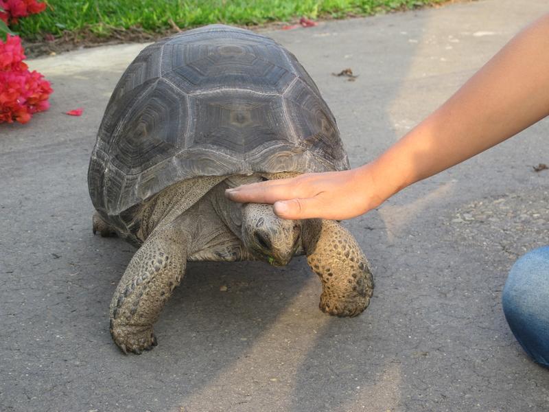 動物愛好者認為:刷背就像一種按摩,會讓烏龜感覺舒服。(廖素貞/大紀元)