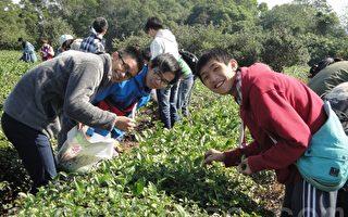 校园茶文化体验 联大开办采茶赛