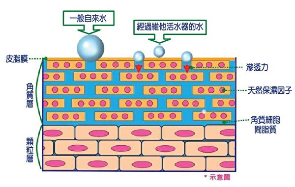 大分子团水 喝了不能消化 皮肤洗了不吸收(图:百渥萝思提供)