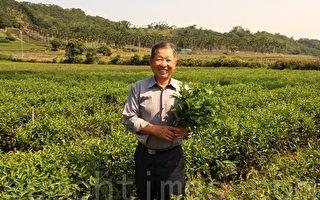 黄正恒自然农法种茶  重质不重量