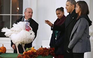 感恩節傳統 奧巴馬特赦火雞