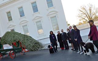 美第一夫人喜迎白宫圣诞树