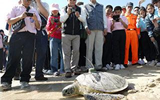 海生馆野放海龟  建构伤病通报