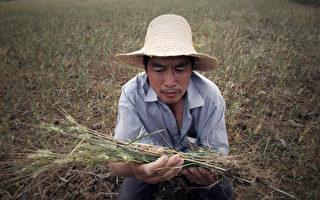 夏小强:湖北断粮 敲响中国粮食危机警钟