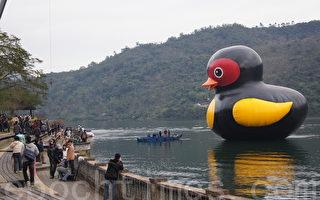 紅面番鴨鯉魚潭下水 觀光客驚豔