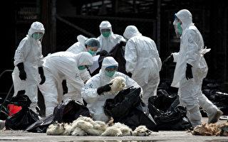 外媒:新型禽流感致一死一病 跟H7N9同源