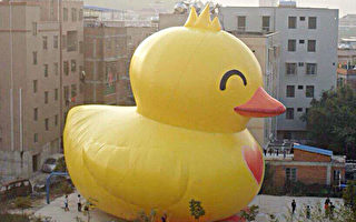 小鴨8日離境  夢想鴨接續登場