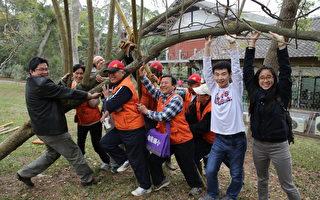 东海植树周  搭拐杖救大树