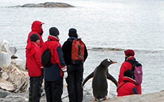 南极出现破纪录高温 首度突破摄氏20度