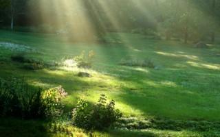 神性的复活与回归