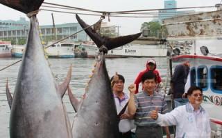 第一鲔300公斤确认  首度由东港籍船长拔头筹