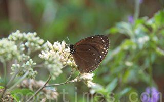 紫斑蝶生态保育 县府系列活动推广